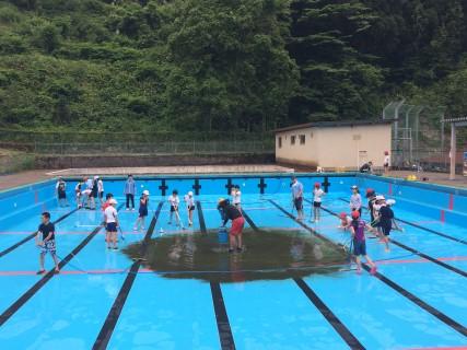 プール掃除6月2日