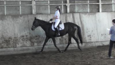 馬場馬術競技の写真です。