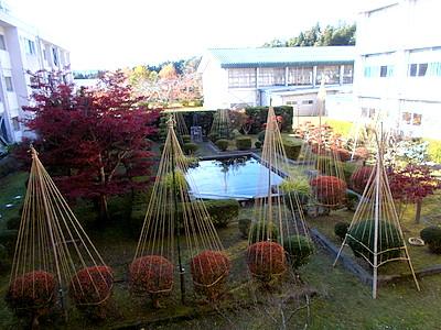 午後の庭の様子